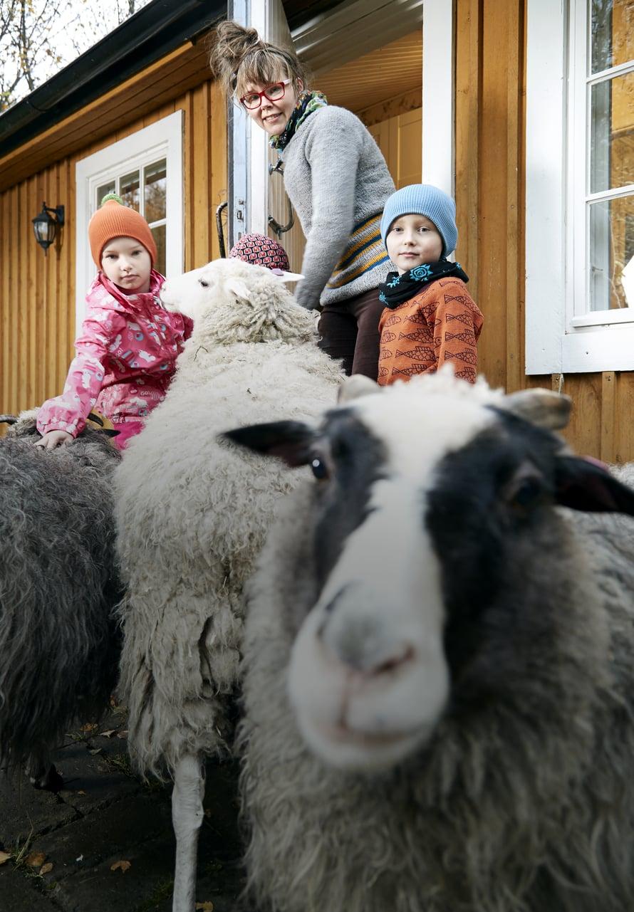 Eläinrakas perhe hankki lampaita ja kanoja kolme vuotta sitten. Lampaat ovat perheen lemmikki- ja terapiaeläimiä. Johannan mielestä yksi parhaista asioista on istua kesällä pihakivellä ja rapsuttaa lampaita. Kuva: Juha Salminen