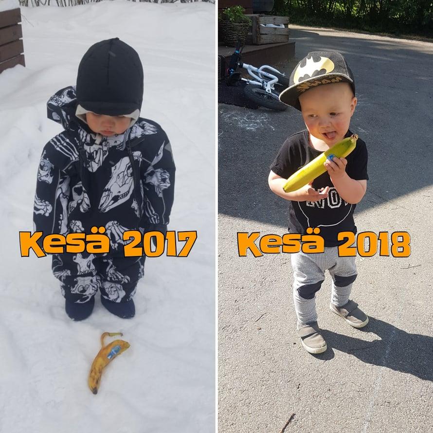 Banaanitkin näyttävät nyt paremmilta, kuin kesällä 2017. Kuva: Koti-iskä88