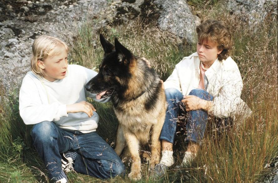 Susikoira Roi (1987). Kuva: Yle/Seppo Sarkkinen.