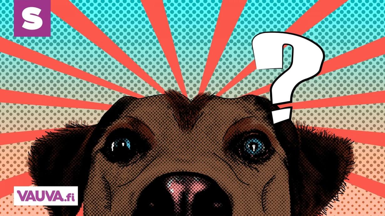 Kertokaa nyt jos vain jotain hajua teillä on, että tuijottavatko mäyräkoirat keskimäärin enemmän kuin nuo noutajat? kyselee huolestunut koiranhoitaja Aihe Vapaalla. Kuva: Niina Markkanen/Pixabay